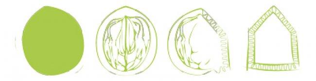 Concept évolution Brouae
